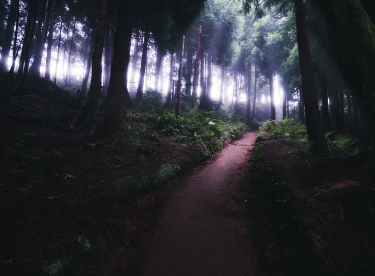 Azores Sao Miguel misty forest
