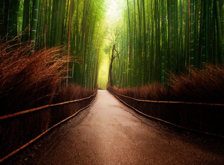 Arashiyama bamboo grove japan