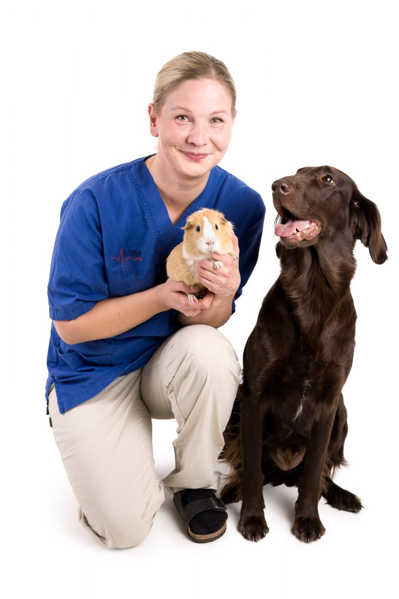 yrityksen markkinointikuvaus eläinlääkäri